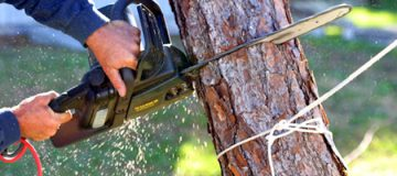 Tree Lopping Perth - Tree Loppers Perth | Just Trees Perth