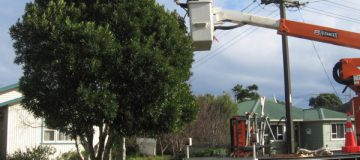 Tree Trimming Perth - Trimming Trees - power line clearance Perth | Just Trees Perth