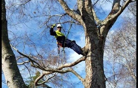 tree removal perth tree services perth just trees perth. Black Bedroom Furniture Sets. Home Design Ideas