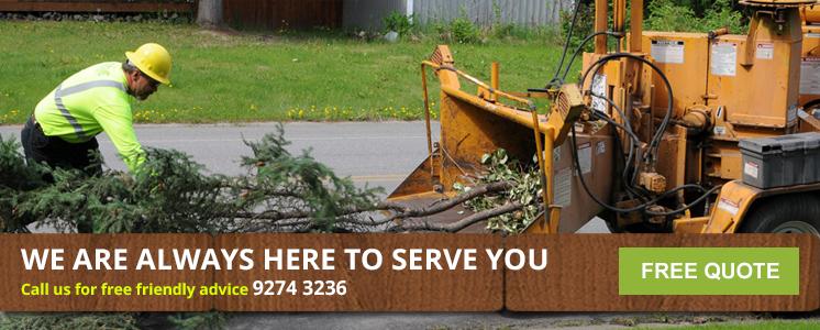Tree Mulching - Tree Mulching Service