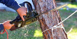 Tree Loppers - Tree Lopper Perth | Just Trees Perth