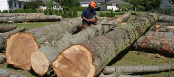 Tree Removals Perth - Tree Services Perth | Just Trees Perth